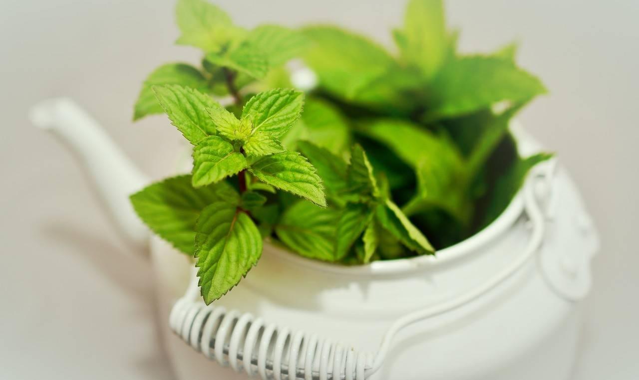Zielona herbata wspomaga odchudzanie